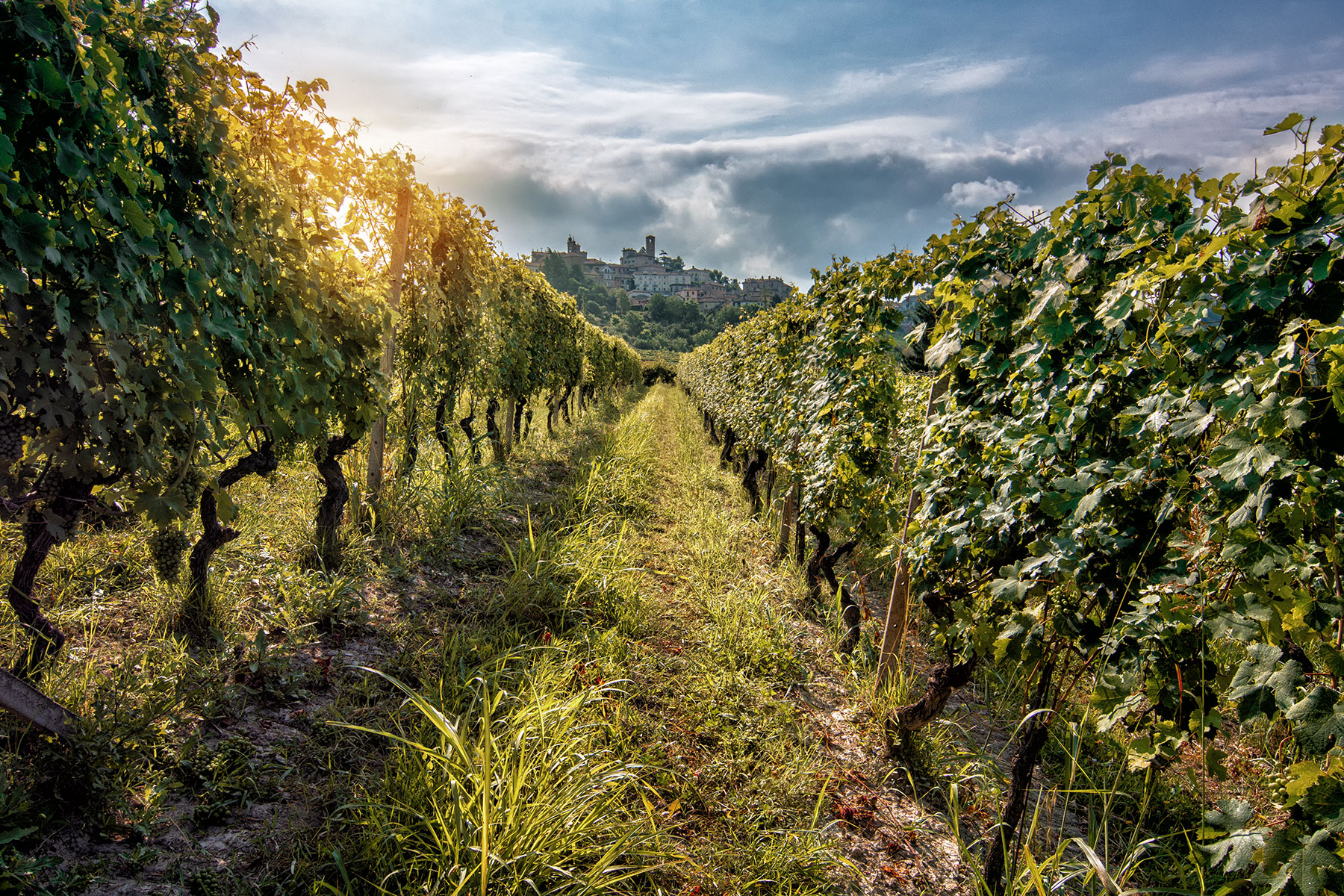La Spinetta - Produrre vini con passione